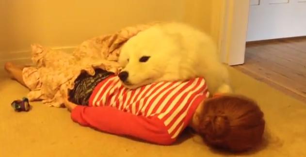疲れた時にはカワイイ動画を見よう!サモエドと子供の最強タッグがカワイイ(*´ェ`*)